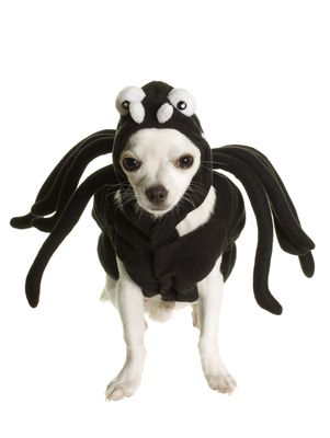 custom image - Dogs With Halloween Costumes On